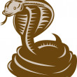 King cobra coiled about to strike — Stock Photo