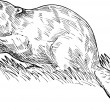European beaver drawing - Stock Photo