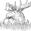 Moose or common European elk drawing - Stock Photo