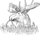 Moose or common European elk drawing — Stock Photo