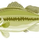 Largemouth bass — Stock Photo