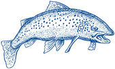 Spotted speckled trout — Stock Photo