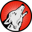 Wolf howling side view — Stock Photo