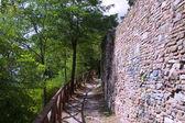 Muur van een oude stad in het bos — Stockfoto