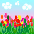 Tulip field — Stock Vector