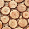 Stock Photo: Wood circles with annual rings