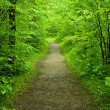Stock Photo: Walking path in forest