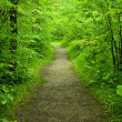 Royalty-Free Stock Photo: Walking path in the forest