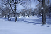 Winter morning in the park — Stock Photo