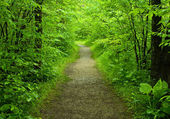 Walking path in the forest — Stock Photo