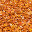 Red yellow fall leaves on the ground - Stock Photo
