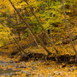 Stock Photo: Small brook in autumn forest