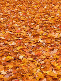Red yellow fall leaves on the ground — Stock Photo