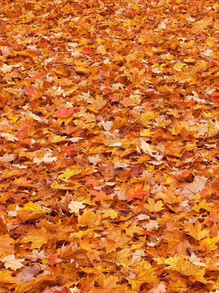 Land covered with red yellow brown autumn foliage  Stock Photo #2113199