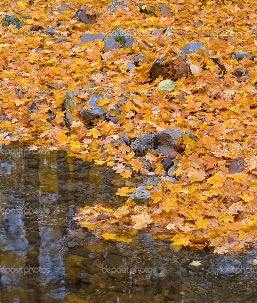 Autumn forest with small brook and orange maple leaves on the ground  Stock Photo #2113206