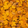 Stock Photo: Colored fall leaves on ground