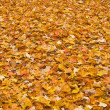 Stock Photo: Red yellow colored fall leaves