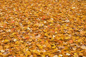 Red yellow colored fall leaves — Stock Photo
