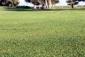 Golf Turf — Stock Photo