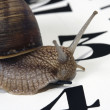 Stock Photo: Edible snail