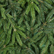 Spruce background — Stock Photo