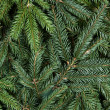 Stock Photo: Spruce background