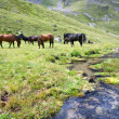 Horses at meadow near stream, Caucasus - Stock Photo
