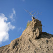 Lonely dry tree at the rock — Stock Photo