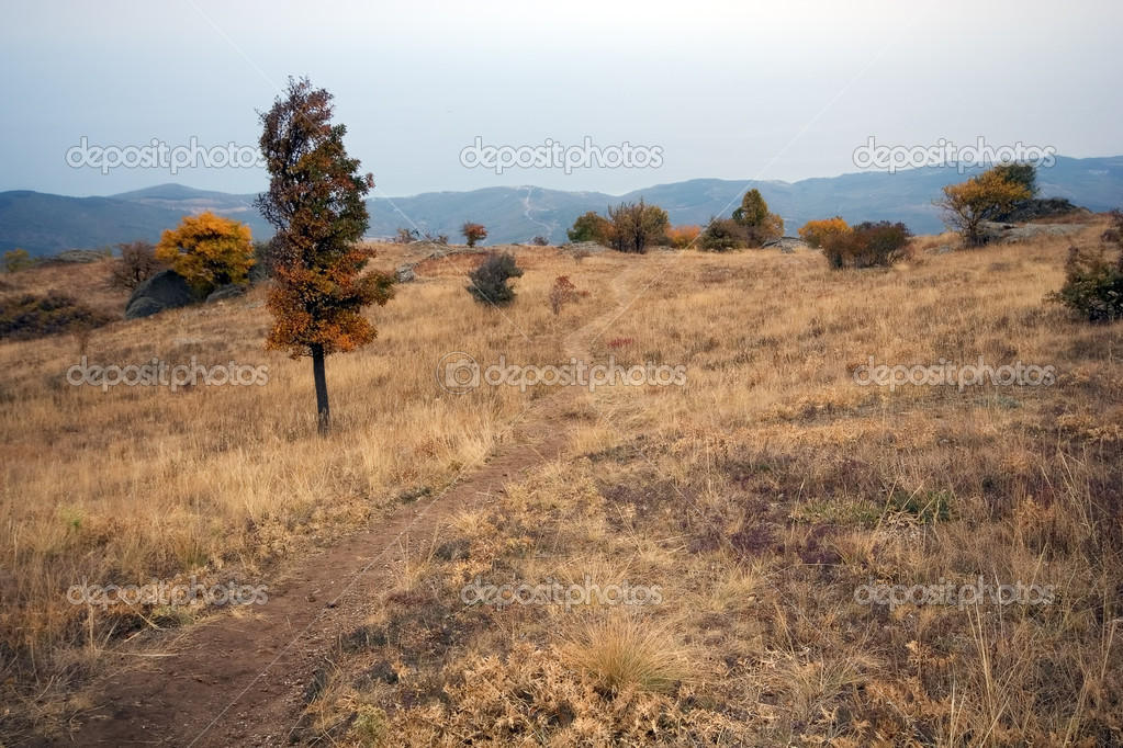 Trees, dry grass and road on the mountain plateau in autumn. Crimea. Urkaine. Europe. — Stock Photo #2134675