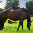 Horse and foal — Foto de Stock
