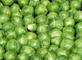 Brussel Sprouts — 图库照片