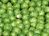 Brussel lahanası — Stok fotoğraf