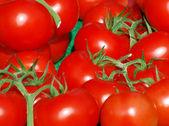 Juicy tomatoes — Stock Photo