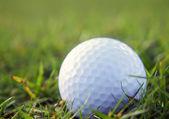 Bola de golfe no capim áspero — Foto Stock