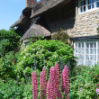 Foto Stock: Thatched cottage garden