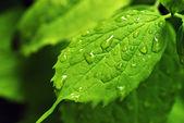 Rain drops on leaf — Stock Photo