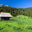 Stock Photo: High Mountain Meadow Scenery