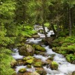 Stock Photo: Forest Stream in TatrMountains