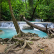Stock Photo: Tropical Forest Scenery