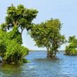 Stock Photo: Tonle Sap Lake