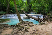Tropical Forest Scenery — Stock Photo