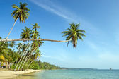Tropical Landscape — Stockfoto