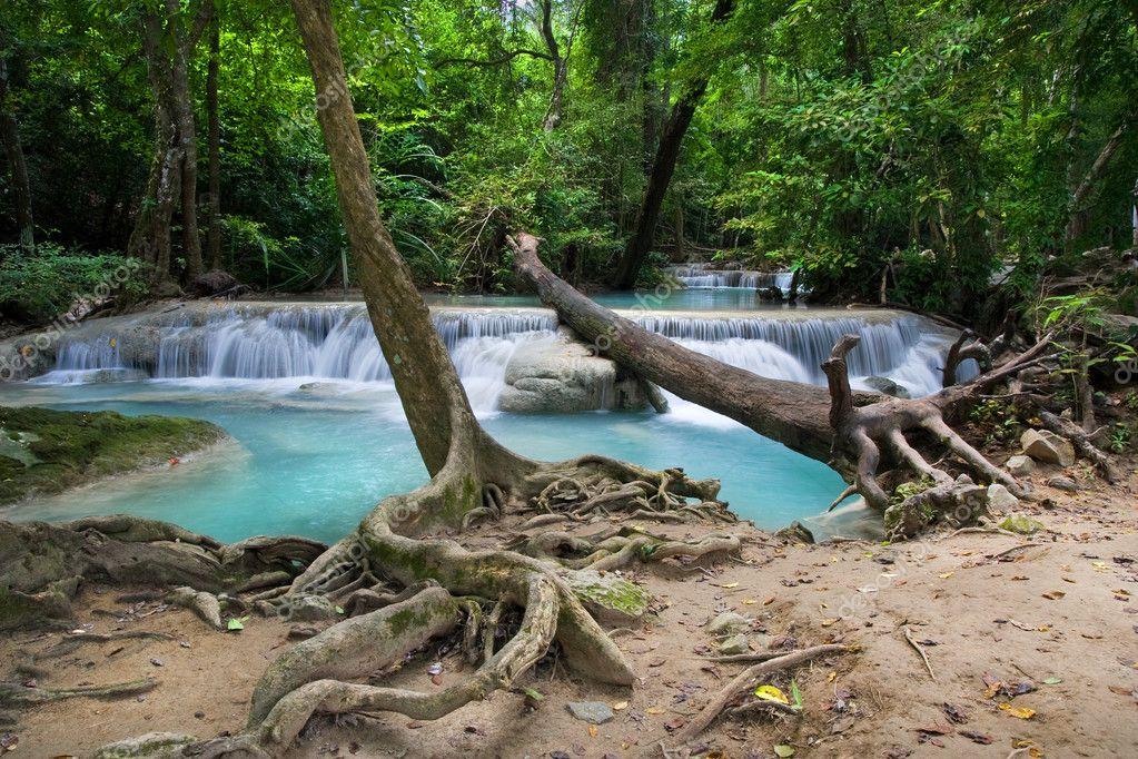 Фотообои Тропический Лес Пейзаж
