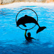 Dolphin Show — Stock Photo #2504484