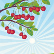 Stock Photo: Cherries ripened in garden