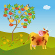 A cow looks at a wild ash — Stock Photo
