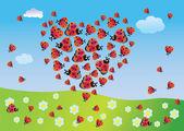 Coração do verão de joaninhas — Fotografia Stock