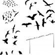 Bird — Stockvector #2393729