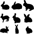 Rabbits - Stock Vector