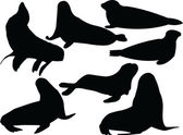 Seals collection silhouette — Stock Vector